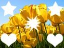 flores da semana