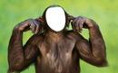 Rostro de mono