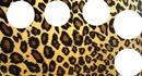 portada animal print