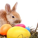 Happy Easter (rabbit and eggs)