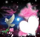une colombre une rose et un coeur 1 photo