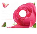 liebe ist rose