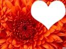 fleur en coeur !
