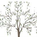 arbre généalogique 10 photos