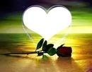 coeur avec une rose 1 photo