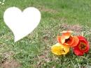 Les fleurs = le coeur ?