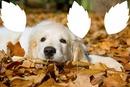 chien dans les feuilles mortes 3 photos