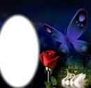 rosa- mariposa