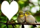 Nature - oiseaux amoureux