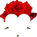 uma rosa no jardim
