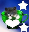 chaton dans une tasse 3 photos