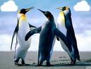 les pingouins en folie