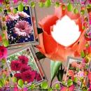 cadres de fleurs