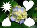 la fleur d'étè