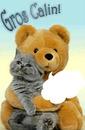 chat dans les bras d'un ours peluche 1 photo cadre