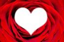 Rose Rouge en coeur