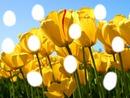 Cadre photo Tulipe