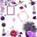 violet pour l'étè