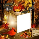 photo couleur d'automne*