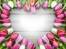 coeur tulipes
