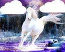 un cheval blanc 2 photos