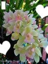 Flores e NAtureza