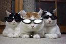 reflet dans les lunnette du chat