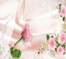 eine Rose -ich liebe dich