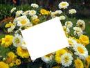 jardin de fleurs jaune et blanc