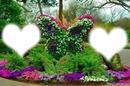 rosa en mariposa