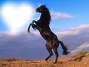 Nature cheval