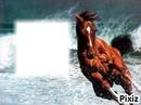 le cheval des mer