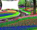 jardim de flores coloridas