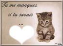 Tu me manque .... + un chat