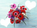 /*FLOWERS/*