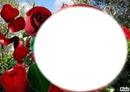 rose des ïles