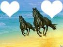chevaux !