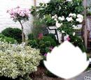 jardin floral