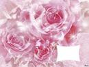 mon didou sur une rose
