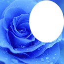 <3 Blue rose of Love <3