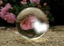 coeur et rose dans une boule de cristal