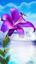 schöne Lilie für dich