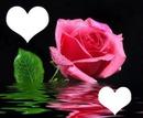 rosa con corazones