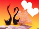 <<calin d'amour*****