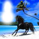 Tony Horse