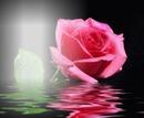 Sera Rosa
