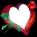 un coeur et une rose 1 photo