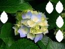 capa de flores de folha