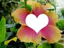 Fleur d'Hibiscus NC