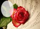 Rosa musical